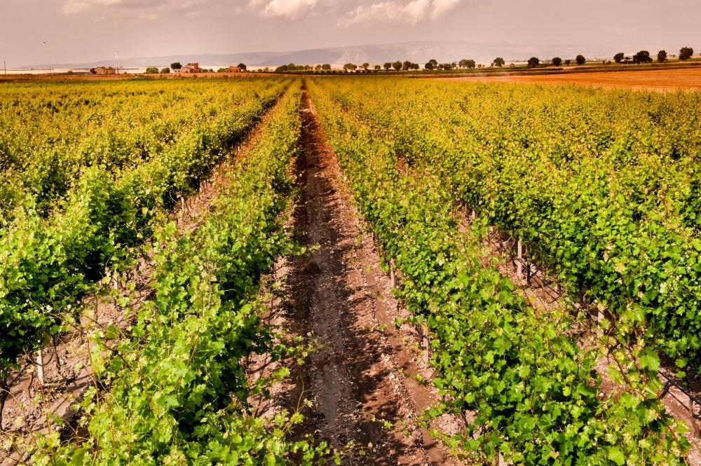 claudio-brufola-italian-wine-corporate-photographer-photographer-in-rome-vino-pugliese-wine-in-italy-best-italian-wine-puglia-vacanza-holidays-in-irtaly-landscape-of-italy_052
